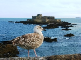 View of Gull with Fort National and high tide