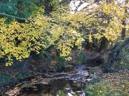 Autumn leaves over the Dollis Brook